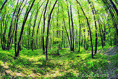 Mistical forest
