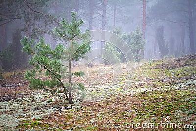 Mistig landschap van het bos