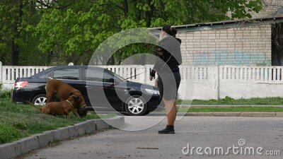 Mistresses of dogs walk animals on grass near house. Young lady with dog stock video footage