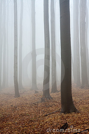 Misty atmosphere in forest