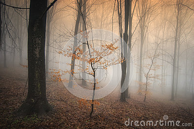 Misty autumn forest with colorful tree