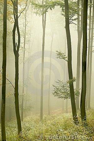 Misty autumn forest with early morning sun rays