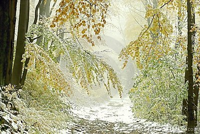 Misty autumn forest path with first snow