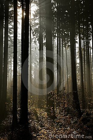 misty autumn forest in rays of light