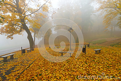 Misty autumn in the park