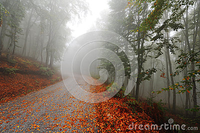 Misty autumn path