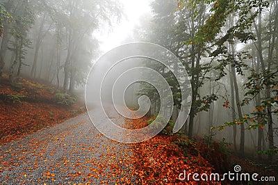 Misty autumn path