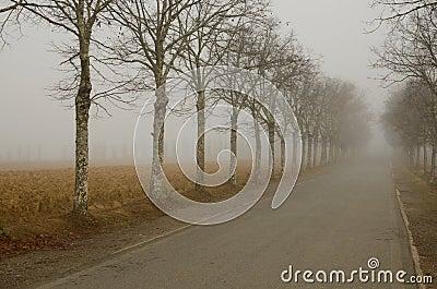 Misty Aveneu