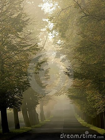 misty country road through autumn trees