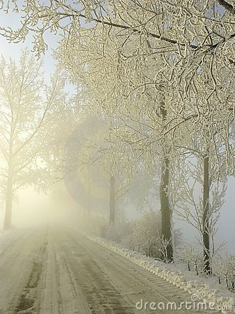 Free Misty Coutry Road With Frozen Trees In Winter Royalty Free Stock Photography - 7699117