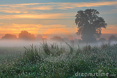 Misty dawn autumn morning