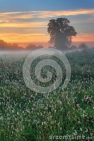 Misty dawn autumn morning