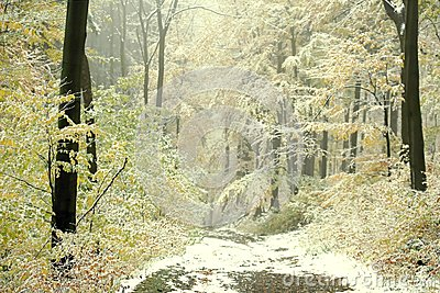 Misty fall forest walk with first snow