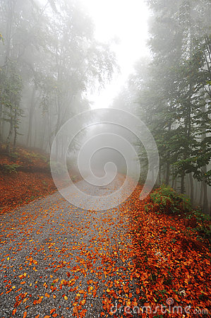 Misty fall path