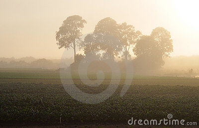 Misty farm sunrise