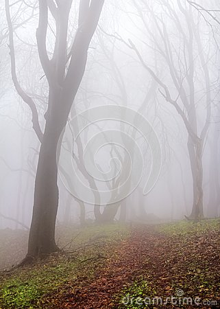 Free Misty Forest Stock Images - 112741614