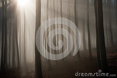 Misty forest in the autumn morning