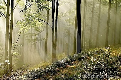 Misty forest with early morning sun rays