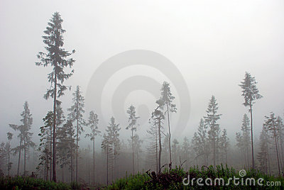 Misty Forest In The Mountains Royalty Free Stock Image - Image: 20646186