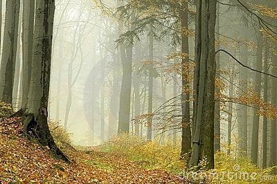 Misty forest path at the end of autumn