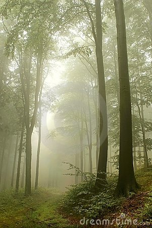 Misty forest path in the mountains