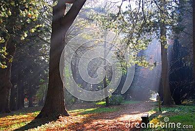 Misty Forest Sun Rays