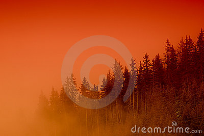 Misty forest at sunset