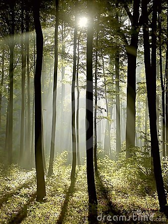 Free Misty Forest With Early Morning Sun Rays Stock Image - 9059071