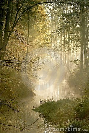 Free Misty Forest With Early Morning Sun Rays Royalty Free Stock Photos - 9271768