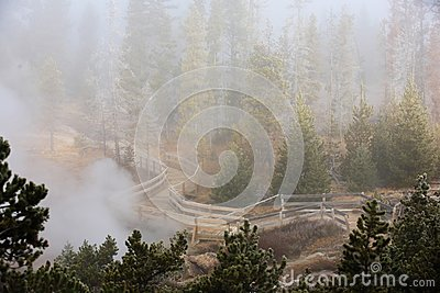 Misty forest  Yellowstone National Park