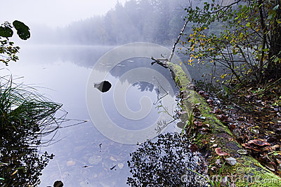 Misty lake morning