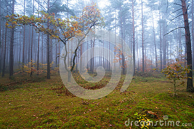 Misty landscape in the forest