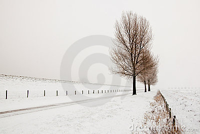Misty landscape with a row of trees