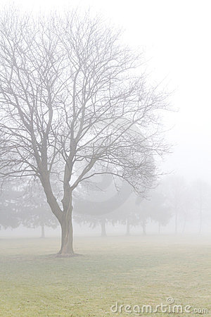 Misty meadow with leafless maple tree