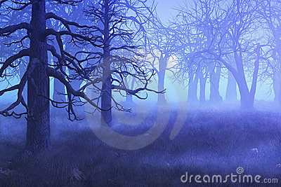 Misty Morning Forest