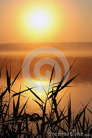 Free Misty Morning On A Small River Royalty Free Stock Photo - 58994905