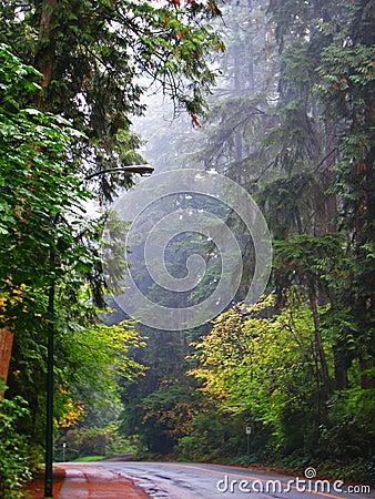 Misty Morning Walk in Woods