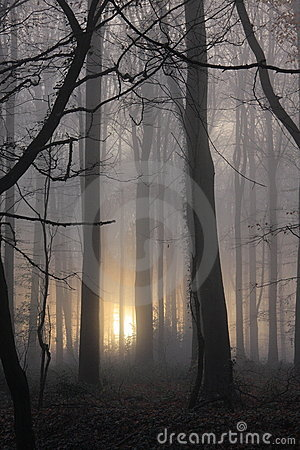 Misty morning woodland portrait