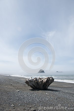 Free Misty Mountain Island With Driftwood At Rialto Beach. Olympic National Park, WA Royalty Free Stock Photography - 99916317