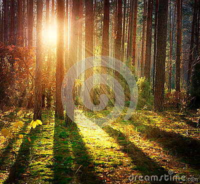 Free Misty Old Forest Stock Photography - 34940732