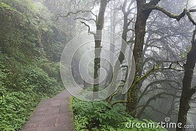 Misty pathway through woods
