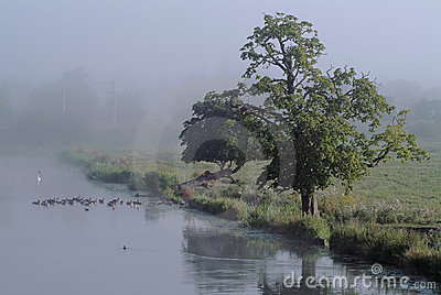 Misty riverside morning