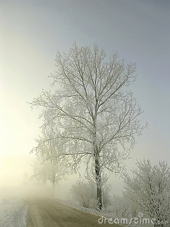 misty road in winter, frost covered tree