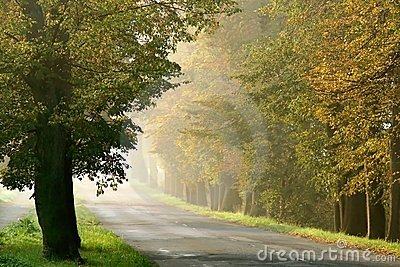 Misty rural road through the autumn trees
