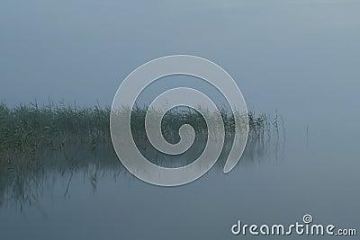 Misty rush