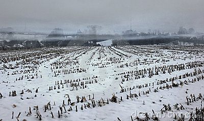 Misty snow covered empty corn field
