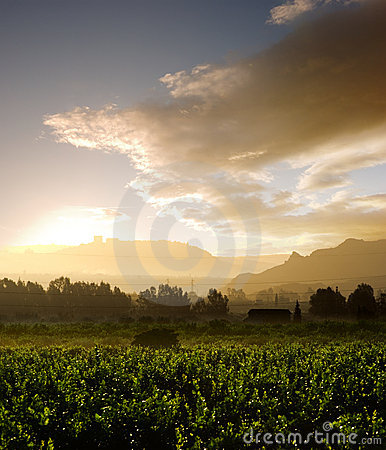 Free Misty Sunrise Royalty Free Stock Images - 8310899