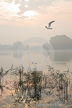 Misty sunrise at the lake