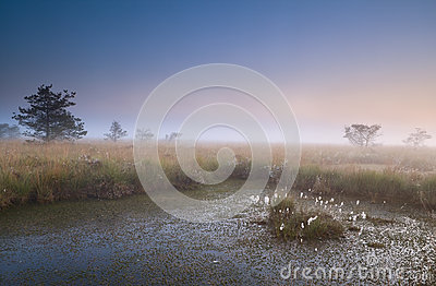 Misty sunrise over swamp
