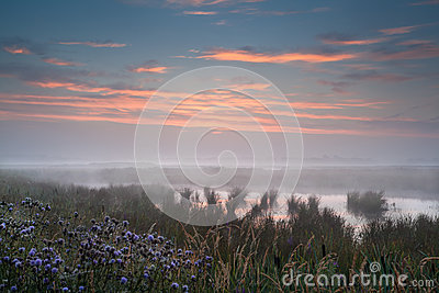 Misty sunrise over wet swamp